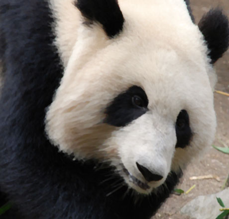 how to recover from google panda